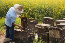 Курские пчеловоды налаживают связи с земледельцами