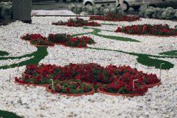 В Курской области могут восстановить розарии