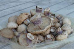 Курянка отравилась покупными грибами