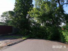 В Курске упавшее дерево перегородило спуск по улице