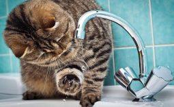 В Курске часть жителей в жару осталась без воды