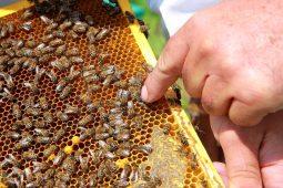 От пчеловодов Курской области поступила информация о гибели пчел