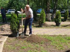 В Курске высадили 75 туй в сквере русско-армянской дружбы