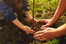 В Курской области на 19 гектарах высадят деревья