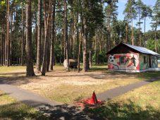 Для курских детей в оздоровительных лагерях путевки остались бесплатными