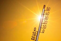 В Курской области температура воздуха достигнет +37º