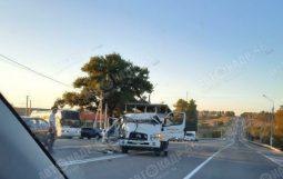 В Курской области в ДТП попал грузовик со свиньями