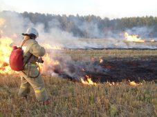 В Курской области за сутки произошло 84 пожара