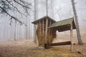 Кабаны и косули зимой не будут голодать