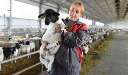 Овцеводческий комплекс в Курской области стал участником нацпроекта