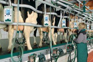 Животноводству помогут западные технологии