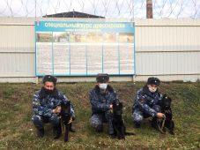 В кинологические службы Курской области поступили новые щенки