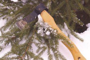 В преддверии Нового года браконьеры срубили 11 ёлок и сосен
