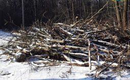 В Курской области арендатор нарушил правила пожарной безопасности в лесу
