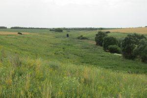 В Курской области появился новый памятник природы «Колодный лог»