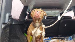 В Курске спасли привязанную к дереву собаку