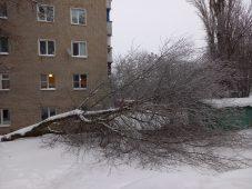 В Курске под тяжестью льда падают деревья