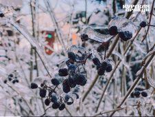 Жителей Курской области ожидает солнечная и морозная погода