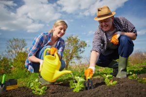Как сделать почву плодородной?