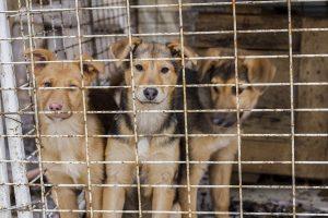 В Курске возобновляется  отлов бродячих собак
