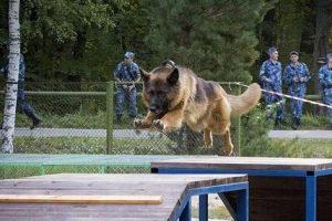 Служебная пенсия для служебных собак