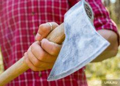 Курянин незаконно срубил дуб в лесу Горшеченского района