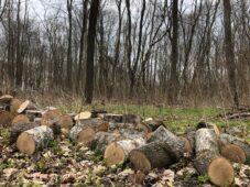 Лес во Льговском районе Курской области рубят законно, а складируют с нарушениями