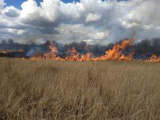 На выходных курские спасатели тушили горящую траву 43 раза