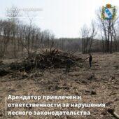 Арендатор леса в Курской области заплатит 110 тысяч рублей штрафа