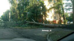 В Курске упавшее дерево перекрыло дорогу