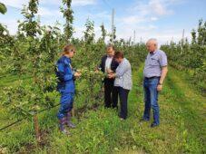 Ливень с градом повредил растения в Курской области