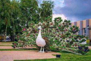 В центре Курска появился большой цветочный павлин