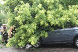 В Курске с корнями вырвало дерево