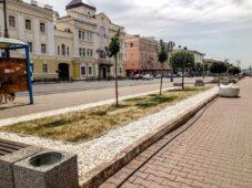 Засохший газон на улице Ленина в Курске заменят по гарантии