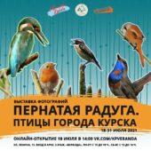 Курян приглашают на выставку фотографий «Пернатая радуга. Птицы города Курска»