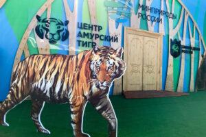 В гости к Амурским тиграм  и гималайским медведям