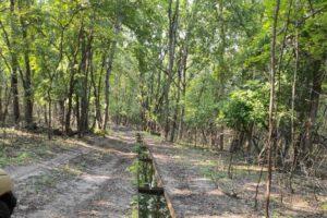 В лесах создают поилки  для животных