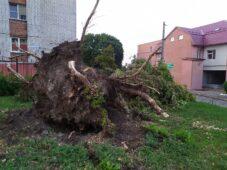 В Курске во время урагана ветер повалил 369 деревьев