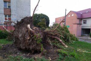 Последствия урагана в Курске устраняют  до сих пор