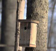 В Курской области установили 15 искусственных гнездовий